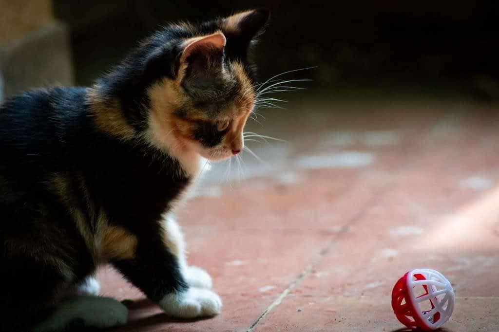 juegos con mi gato