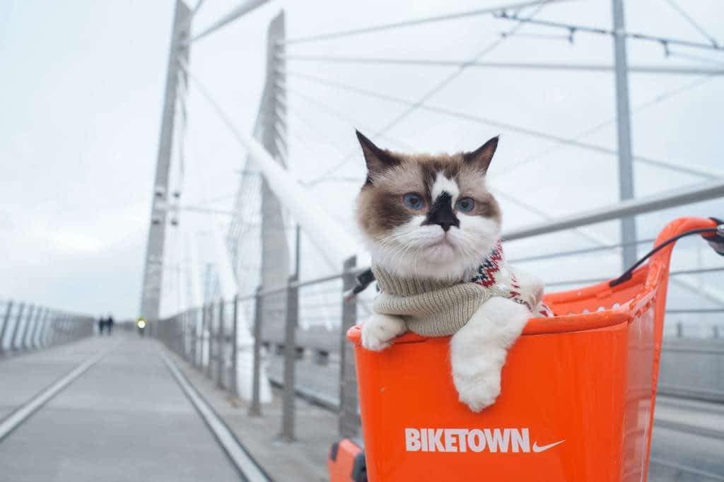 fondos gatos móviles