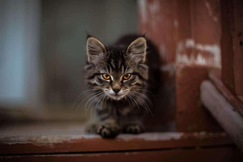 wallpaper cats