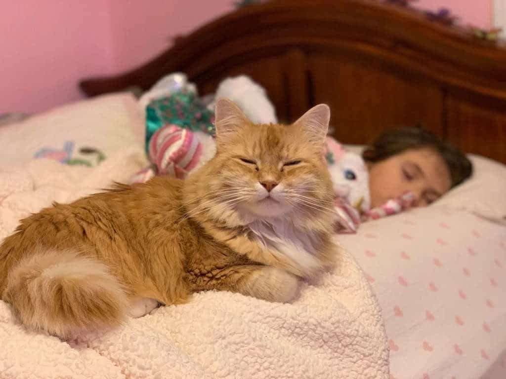 gato orina en la cama