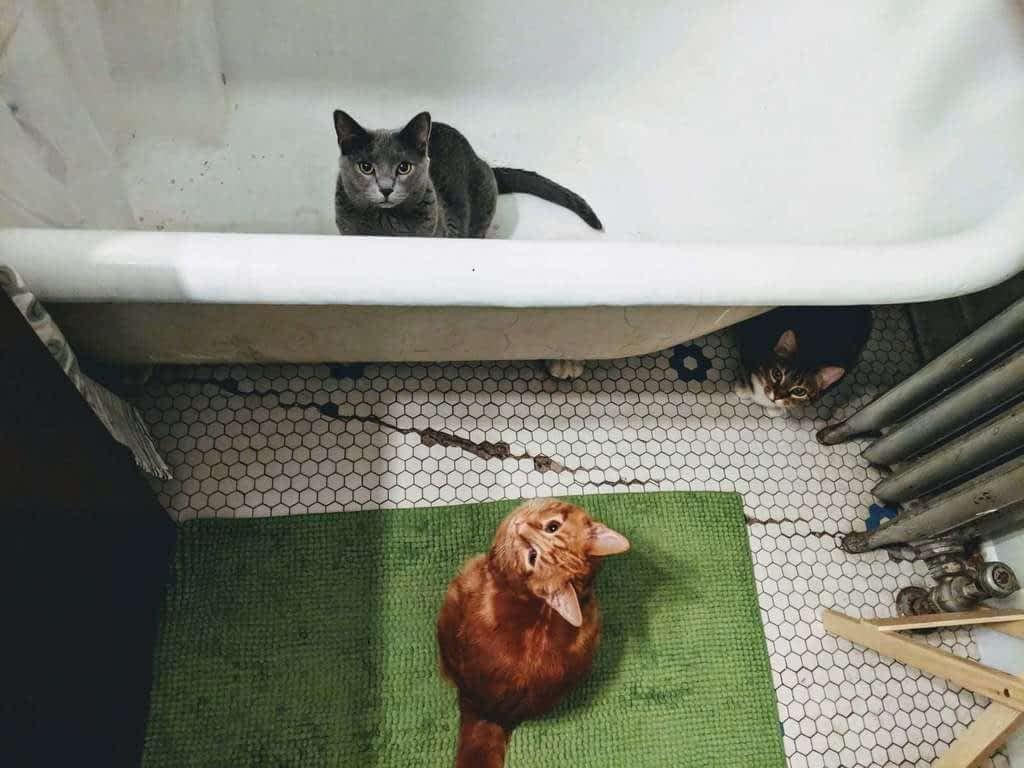 mal comportamiento del gato