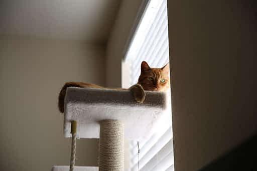 gato en altura