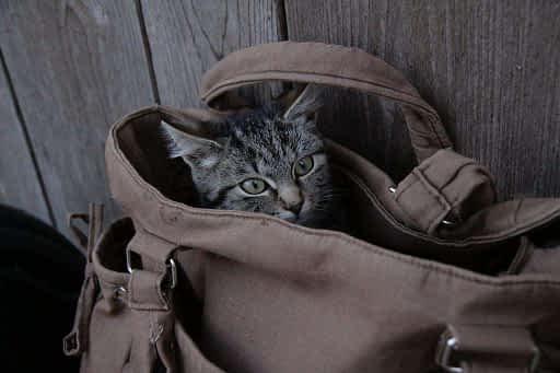 gato jugando feliz en el bolso