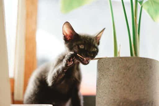 gato mordiendo planta
