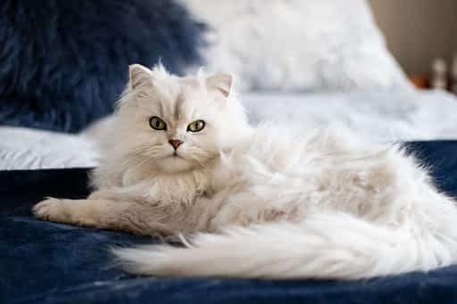 gato senior mayor
