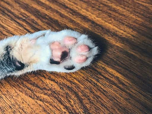 cortar las uñas a tu gato