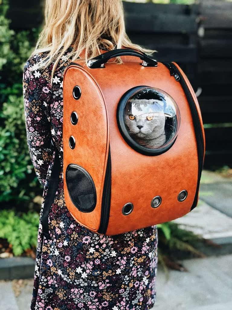 Cómo habituar a tu gato a llevarlo en el transportin