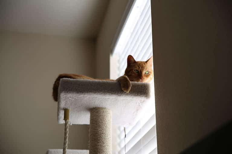 gato en altura del arbol
