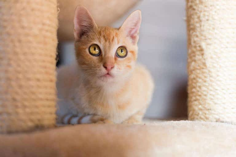 gato busca arbol de juegos