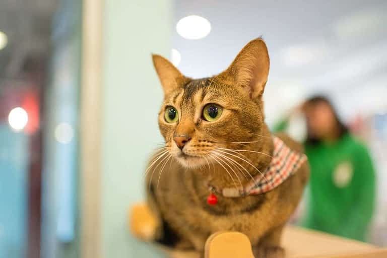 gato en el veterinario