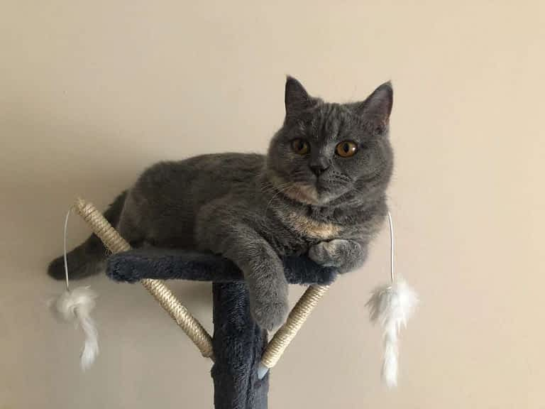 gato que quiere jugar