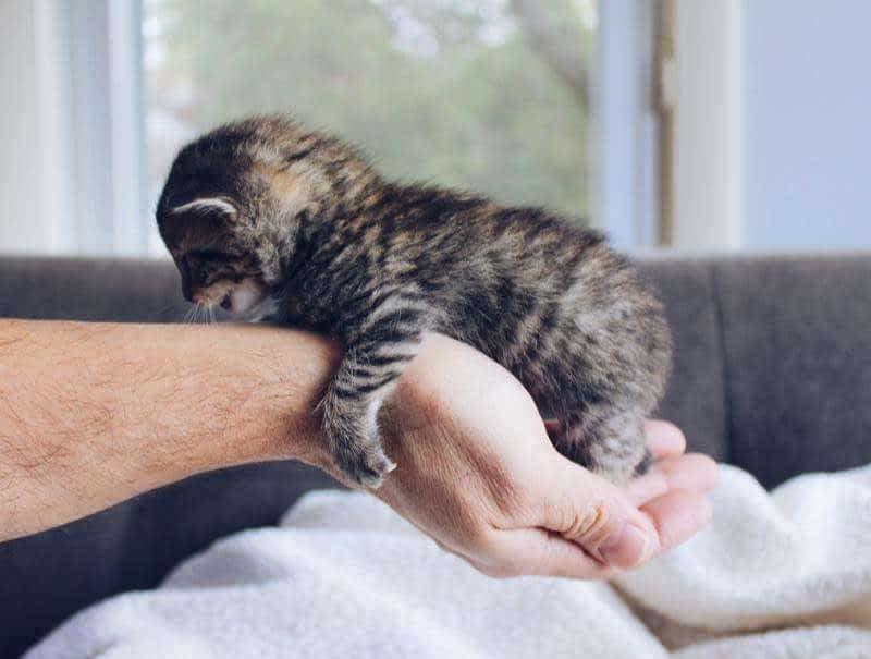 levantar a un gato