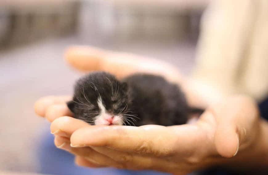 Como cuidar a tu nuevo gatito
