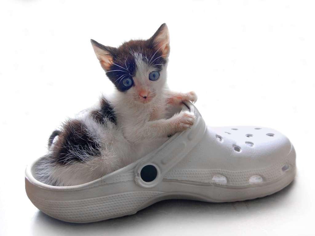 Más de 400 nombres de gatos hembra