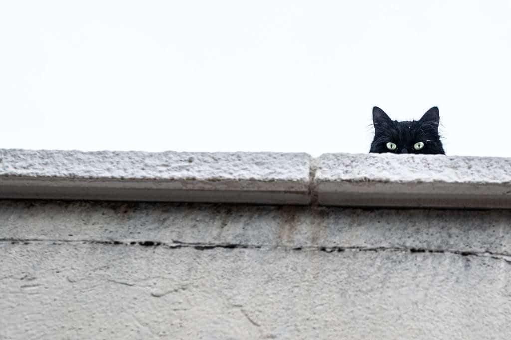 ¿Por qué tu gato necesita escalar?