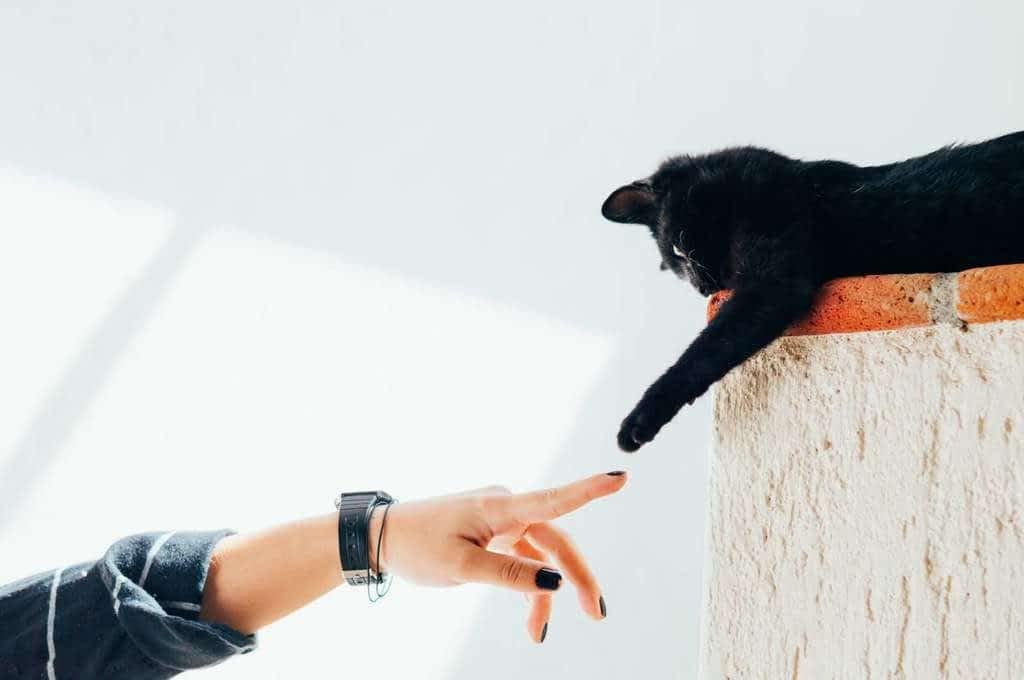 Cómo recortar las uñas a tu gato