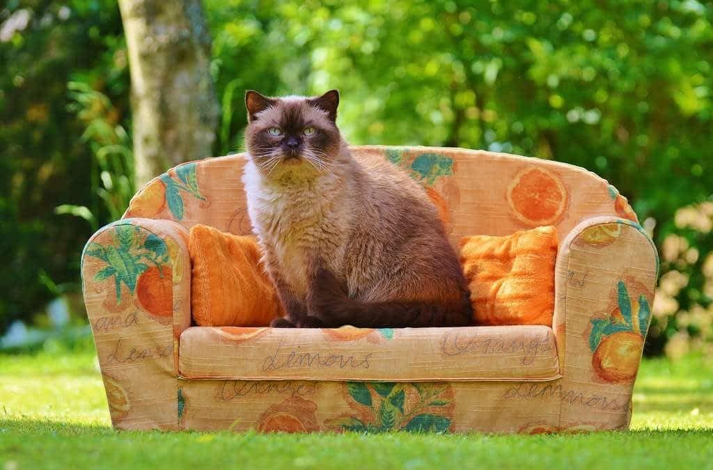 Tu gato tiene sobrepeso? 3 recomendaciones para adelgazar a tu gato