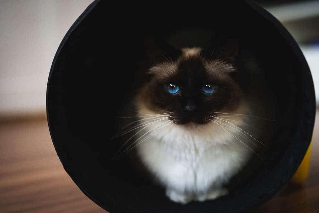 Mi gato está asustado, como lo ayudo?