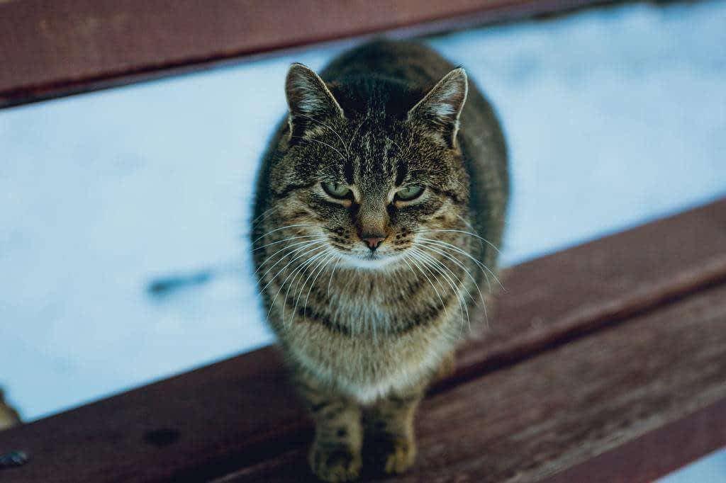 Consejos para prevenir problemas de comportamiento del gato durante el aislamiento de COVID-19