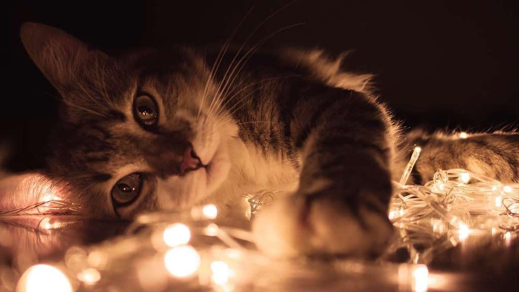 Fondos de pantallas de gatos