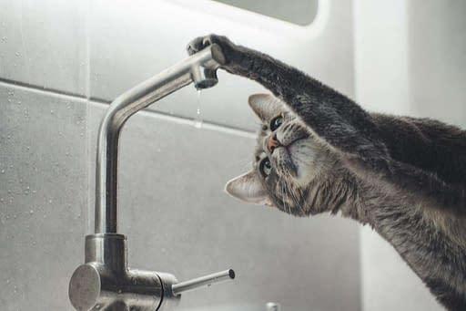 gato tomando agua del grifo