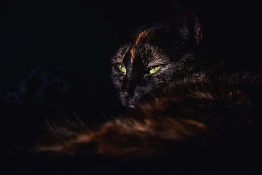 gato problema covid-19