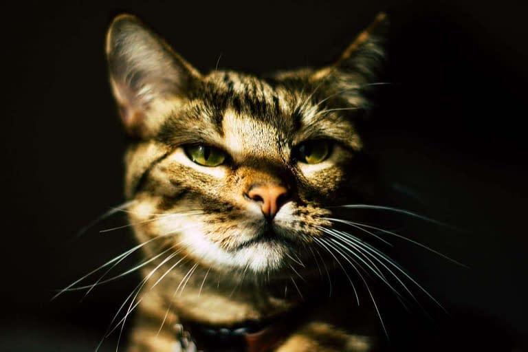 gato y el cáncer