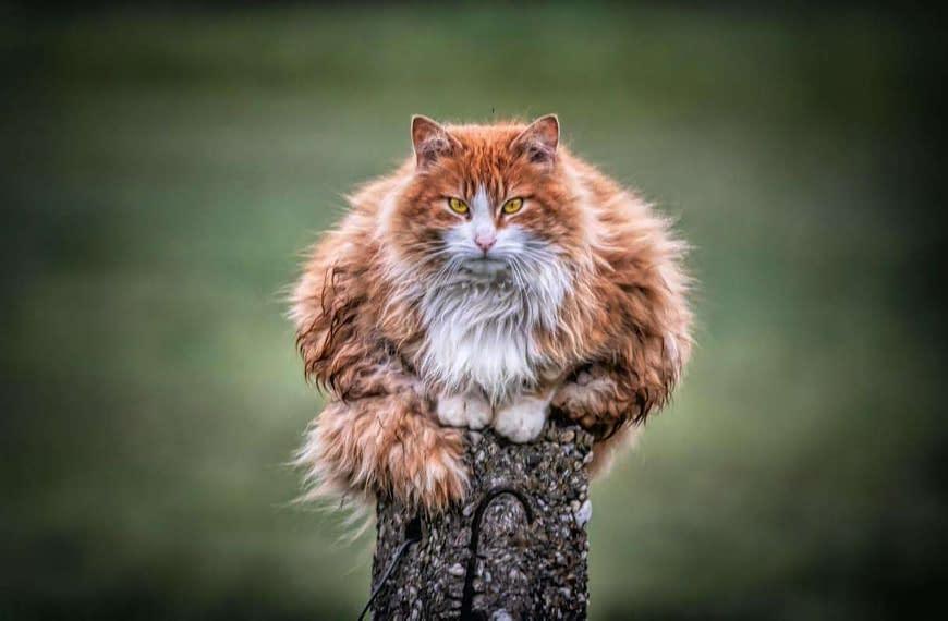 Por qué a los gatos les gustan las alturas?