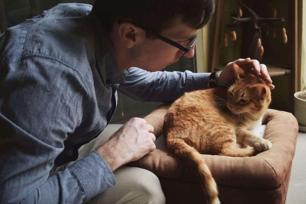 Mi gato tiene problemas urinarios, que hago?