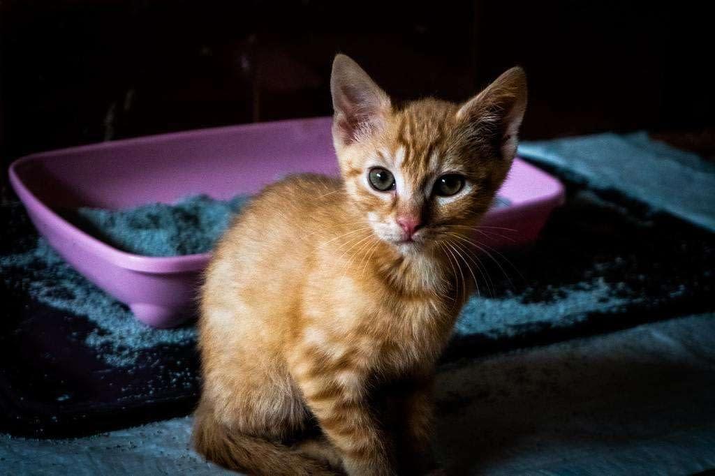 8 errores que cometemos con la caja de arena de nuestro gato