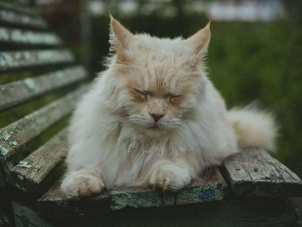 Que darle de comer a un gato mayor (senior)