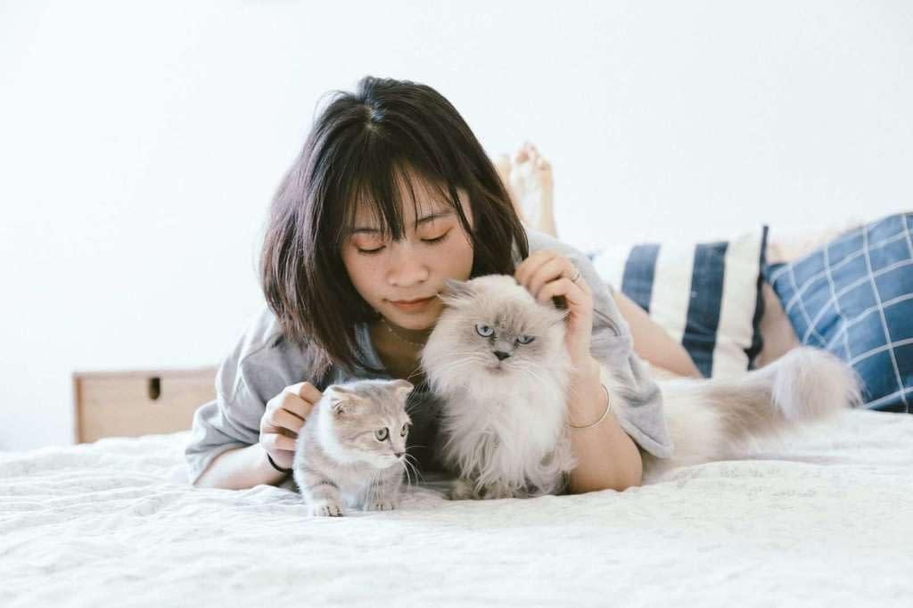Cómo acariciar a nuestro gato