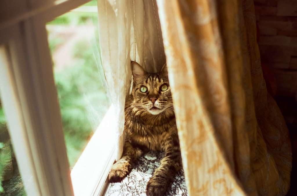 """La lista de verificación """"imprescindible"""" para resolver el problema de comportamiento de su gato"""