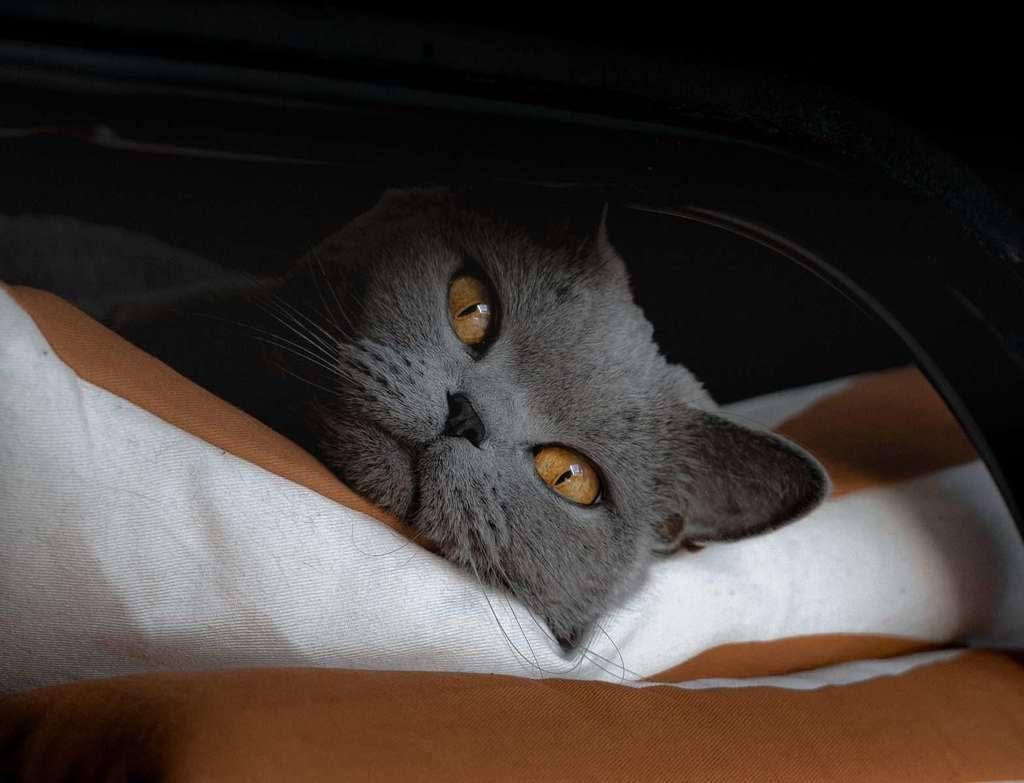Mi gato estornuda, por qué ?