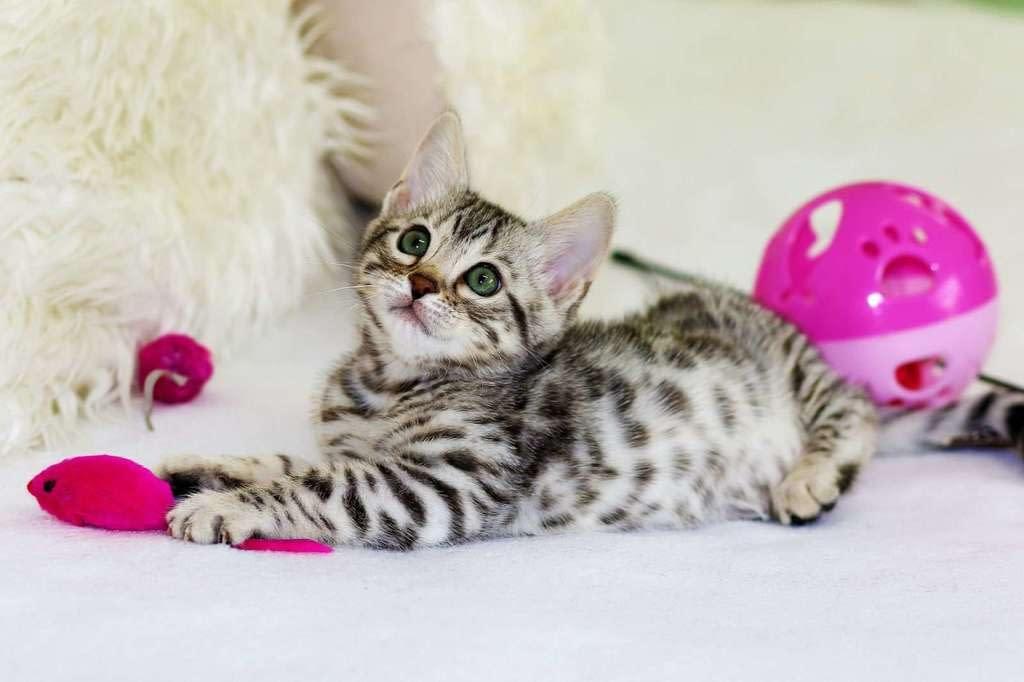 3 juegos que no le pueden faltar a tus adorables gatos