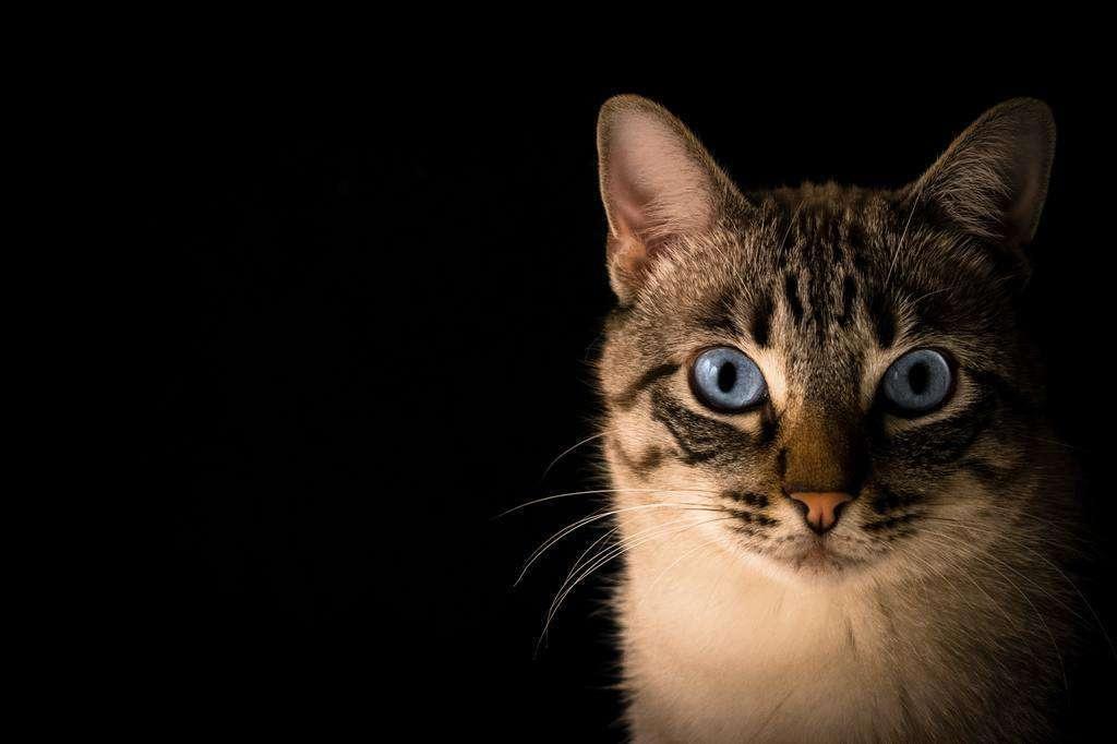 Ejercita la mente de tu gato durante el tiempo de juego