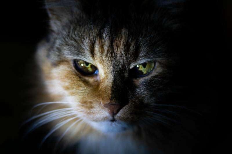 Quieres saber los años que tiene tu gato ? Aquí te decimos la edad de tu gato