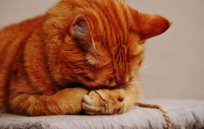 Tu gato se aburre? 5 ideas para estimular a tu gato